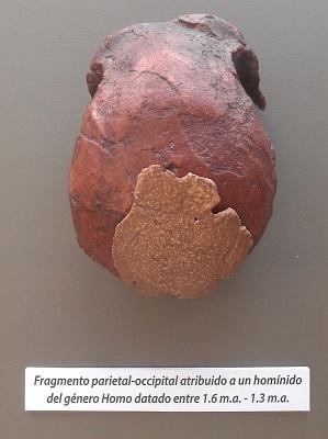 ReplicaFosil_VM-0_Homo