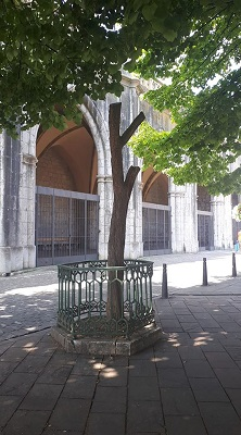 espino-blanco-virgen-de-la-antigua-lekeitio-alvaro-anula.jpg